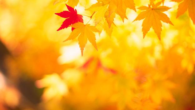 autumn romance ideas