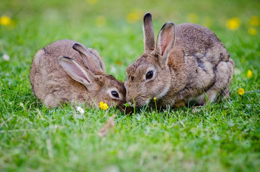 bunnies-in-love-romantic-rituals-bunny-dating-hide-me