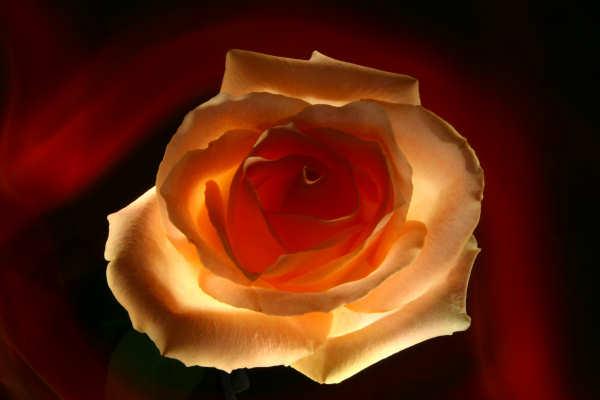 flower petal ideas light up