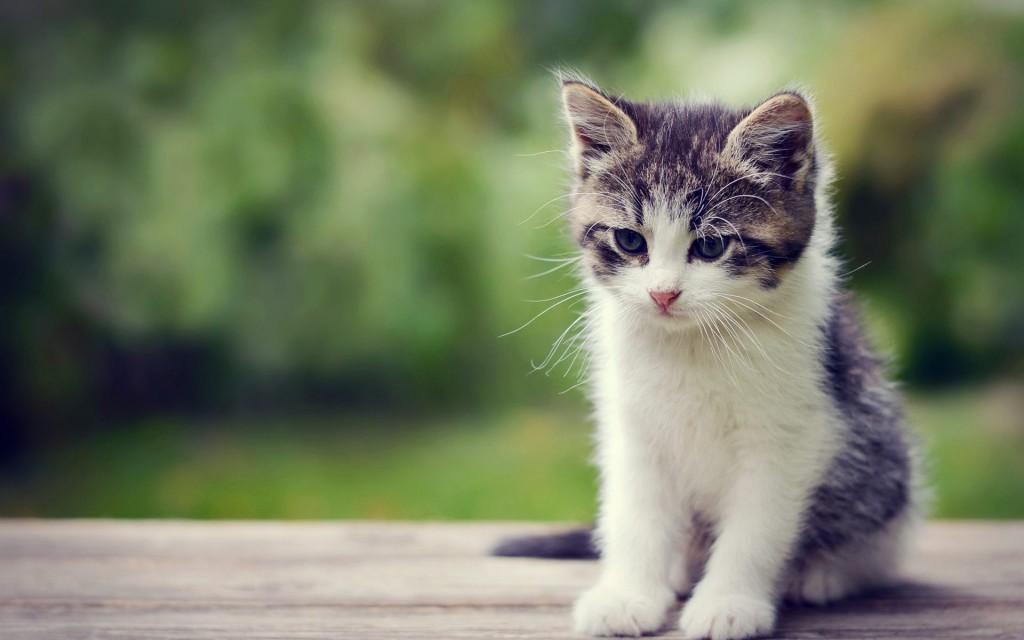 kitten worst romantic gifts
