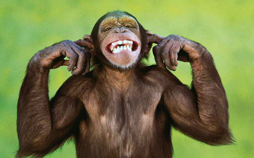 monkeying around romantic jewelry