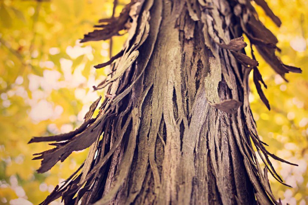 romantic-bark-tree-gift-wrap-present-ideas