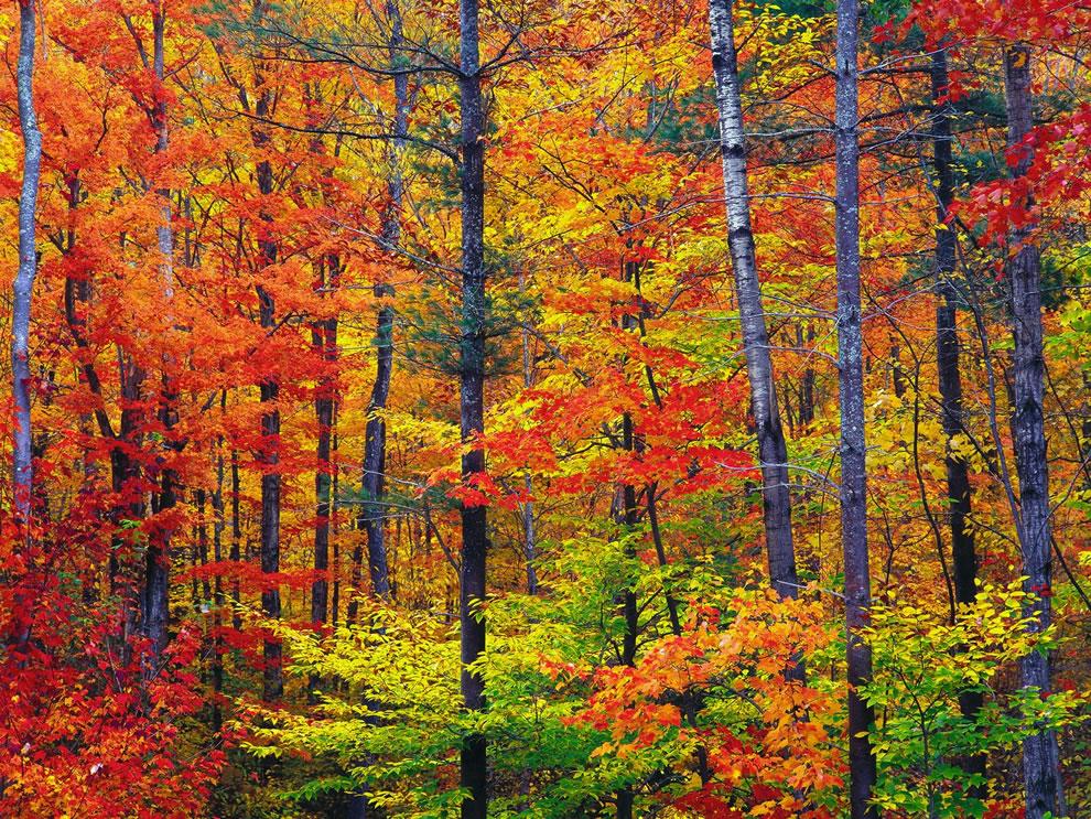 romantic fall autumn proposal