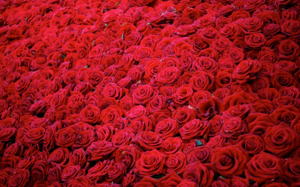 romantic roses spelled I love you ideas