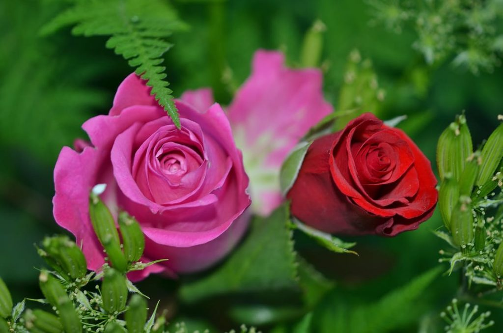 romantic-roses-wreath-pink-red-roses-on-stem-flowers