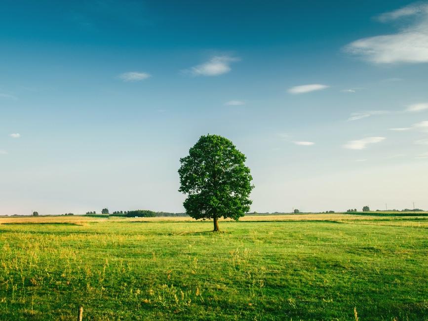 romantic-tree-in-field-proposal-gift-idea
