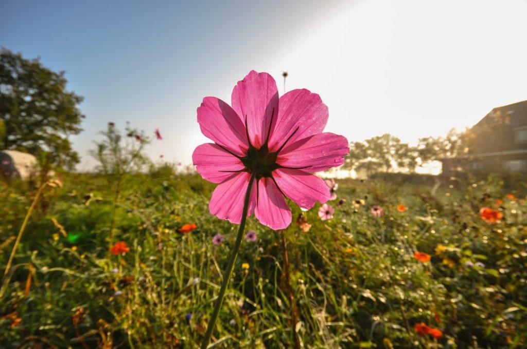 romantic-wildflowers-field-romantic-ideas