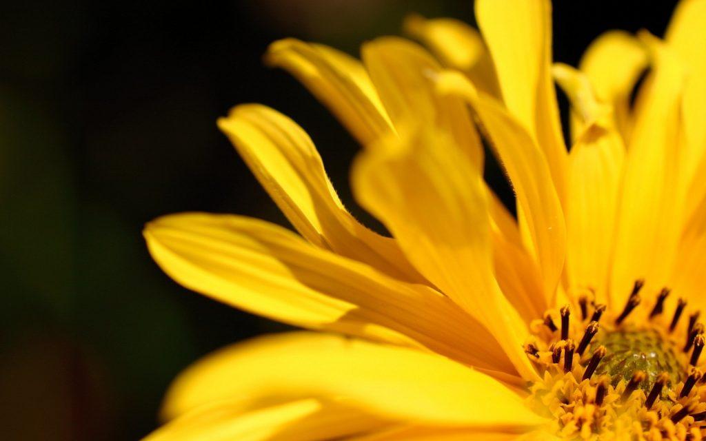 romantic yellow flower petal ideas 39 different ideas using flower petals romantic idea