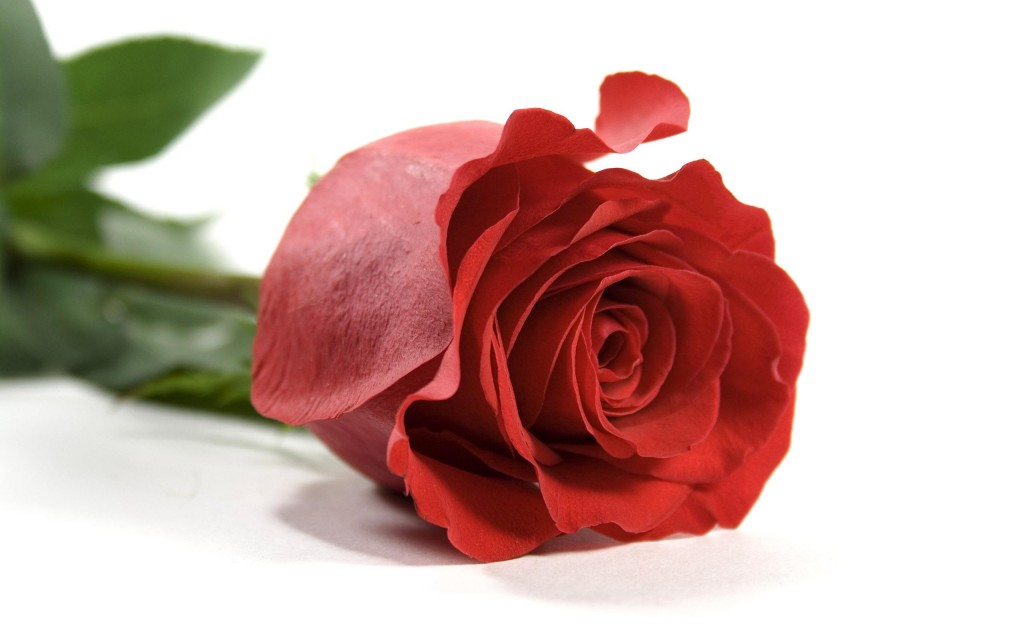 single red rose proposal ideas