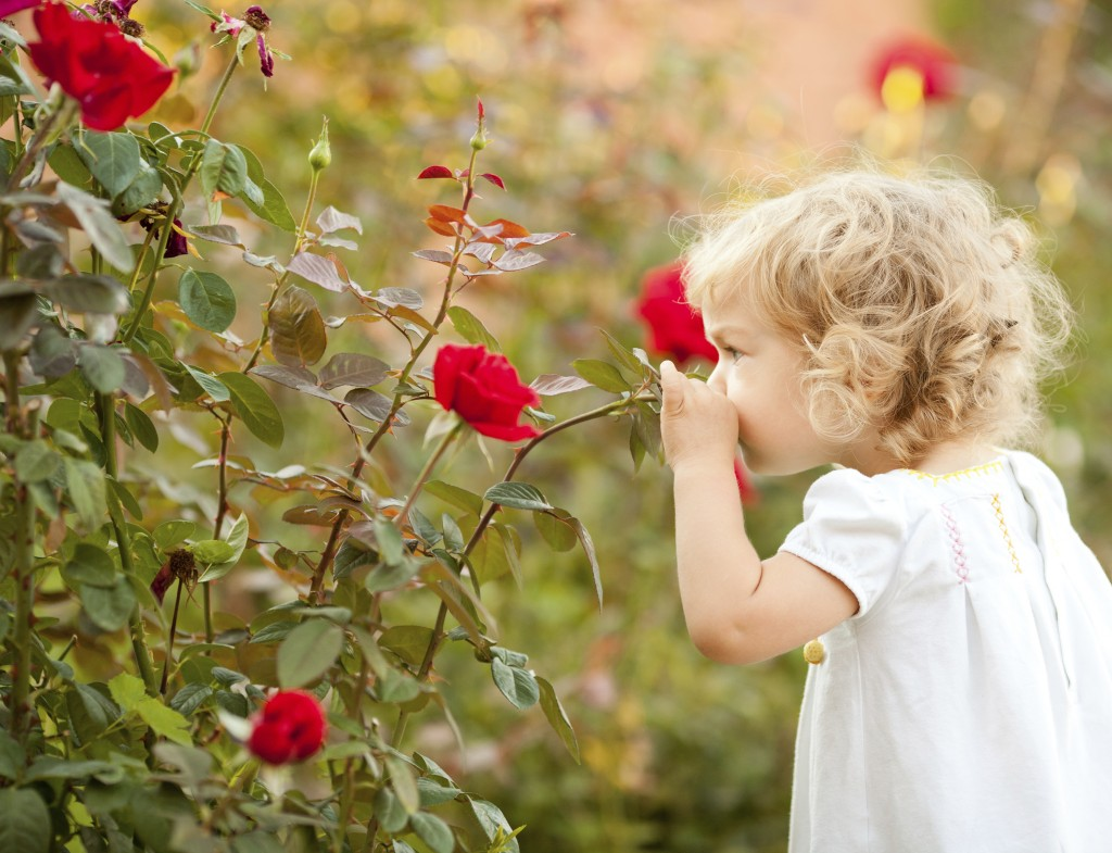 Beautiful child smelling rose