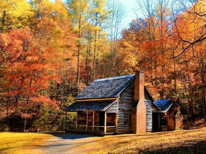thanksgiving cabin