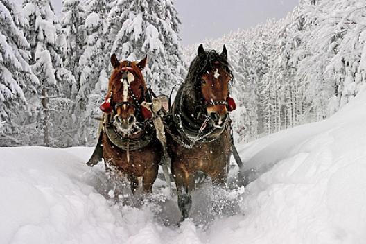 HorseSleighRide