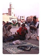 morocco-snake