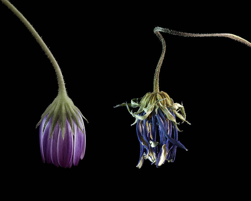wilting flowers given back romantic ideas